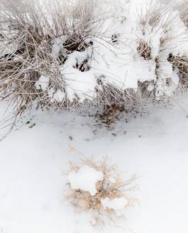 Последний снег в этом году?