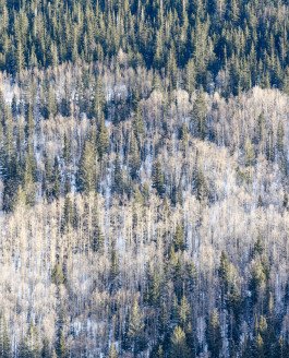Santa Fe Aspen Trail