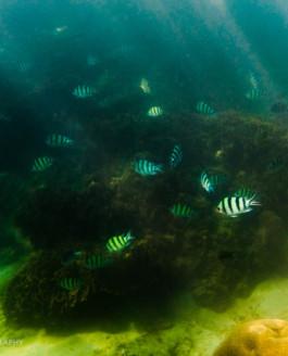 Ocean under the water